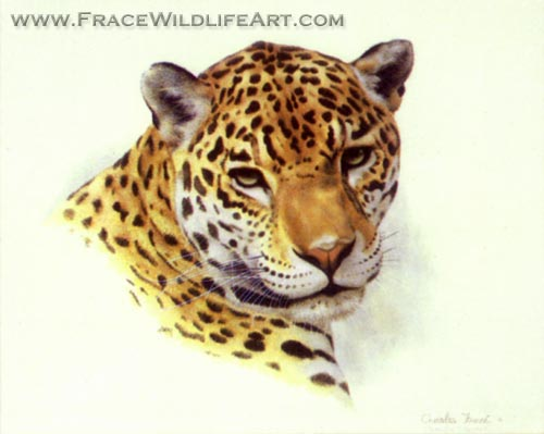 Jaguar (Head)